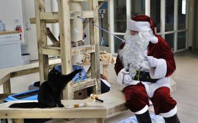 Santa Claws Visits Animal Aid's Shelter Kitties