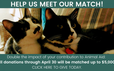 Double the impact of your donation this spring