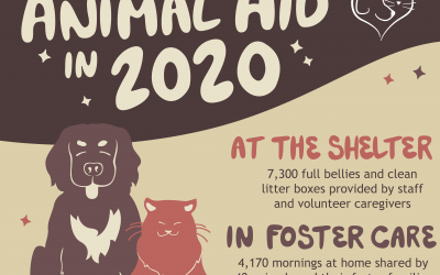 A Year in Review: Animal Aid in 2020
