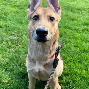 Zola-Adoption Pending!