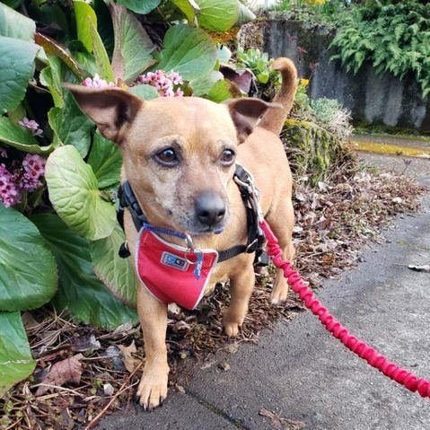 Yoshi: Looking for a Foster!