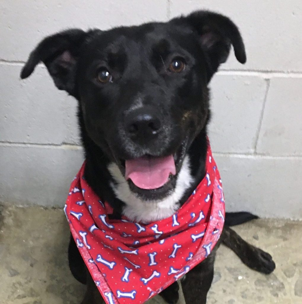 FOSTER NEEDED: Cindy