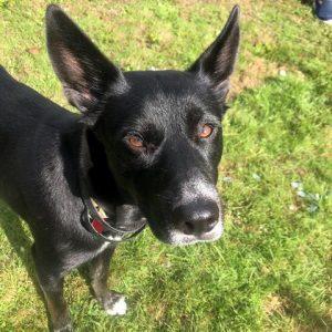 Luna – Adoption Pending!